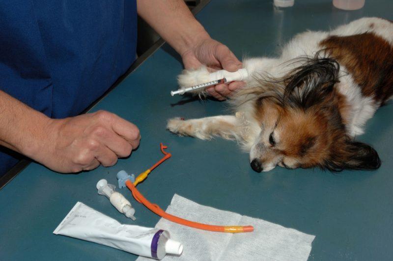 анализ крови на билирубин у собак