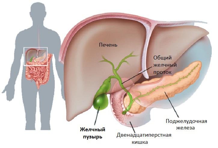 билирубин при беременности