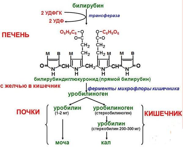 виды билирубина