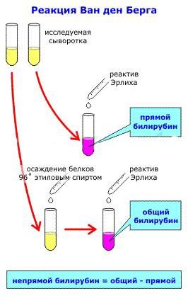 определение билирубина в крови