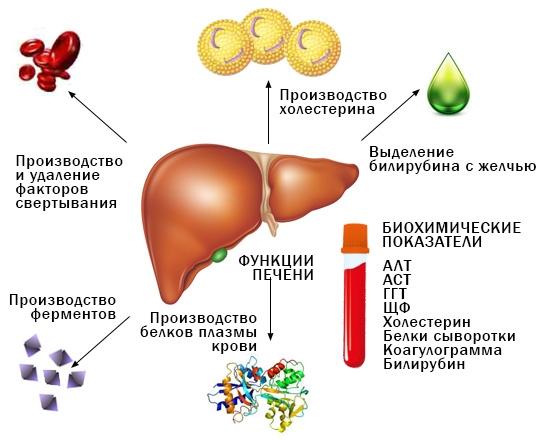 биохимические показатели крови при заболевании печени