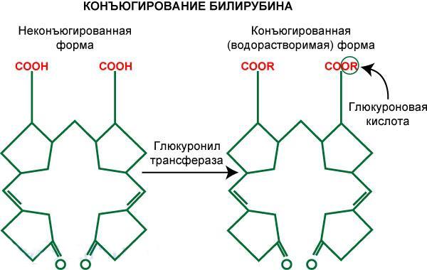 формула прямого и непрямого билирубина