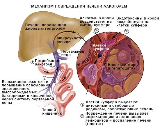 причины низких показателей тромбоцитов и билирубина
